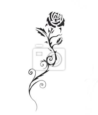 Szkic Tatuaż Sztuki Czarna Róża Obrazy Redro