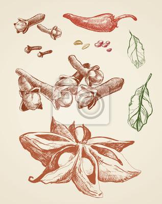 Szkice przyprawy. Zestaw anyżu, chili, liść laurowy, goździki. Czerwony i zielony szkic na białym tle.