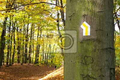 Szlak pieszy znak na drzewie w parku.