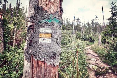 Szlak turystyczny szlifowany malowany na drzewie, stosowany tonizator kolorowy, Tatry Wysokie, Słowacja.