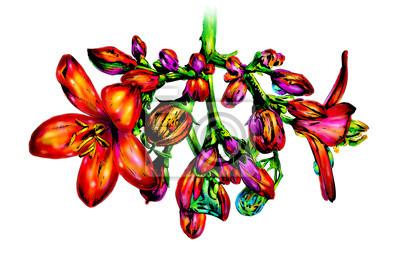 Obraz Sztuka ilustracji kolor kwiat natura rysunek