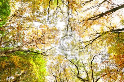 Szukanie poprzez jesienią drzew, charakter tła.