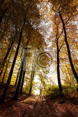 Tajemnicza ciemna jesień krajobraz las.