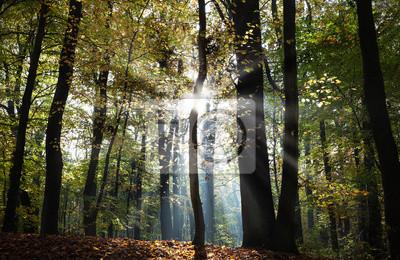 Tajemnicza ciemna jesień krajobraz las z promieni słonecznych.