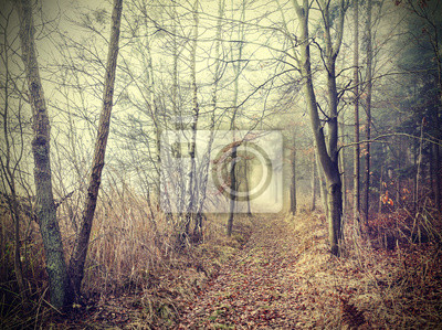 Tajemniczy jesienny las w mglisty dzień.