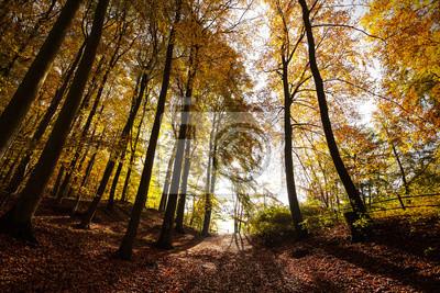 Tajemniczy las jesienią krajobrazu.