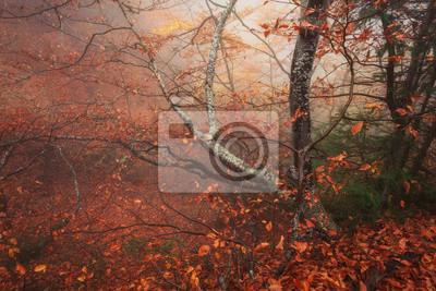 Tajemniczy las jesienią we mgle