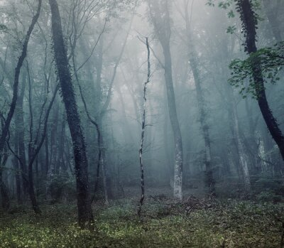 Tajemniczy wiosny lasu we mgle
