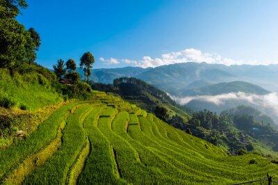 Obraz Tarasowych pól ryżowych, w prowincji Yen Bai, Wietnam