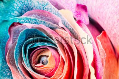 Obraz Tęcza Róża, zbliżenie, makro.