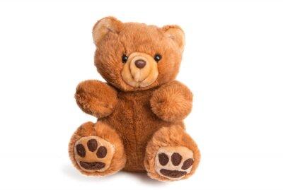 Obraz teddy bear soft toy isolated
