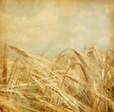 Obraz Tekstura starego papieru. Pole pszenicy.