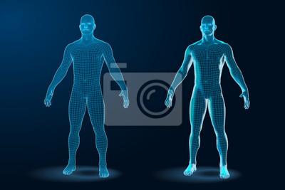 Obraz Temlate set of Human Body 3D Polygonal Wireframe Blueprint. Vector Illustration