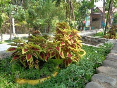 Obraz the beautiful flower on the green garden