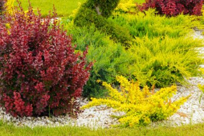 Obraz the element of garden decor colorful small trees gardening