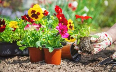 Obraz The gardener is planting a flower garden. Selective focus. nature.