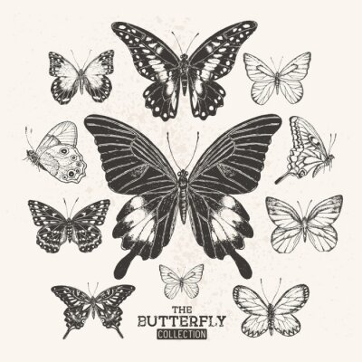 Obraz The Vintage Butterfly Collection