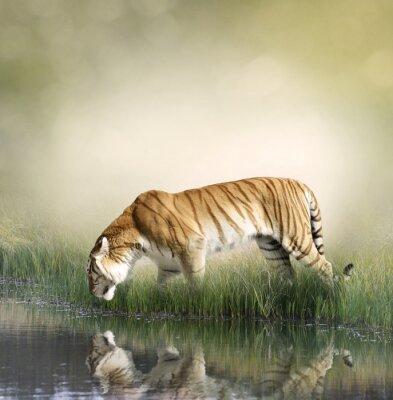 Obraz Tiger pobliżu Staw