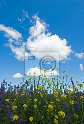 tle kwitnących kwiatów, zielona trawa i błękitne niebo