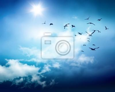 tle nieba ptaki