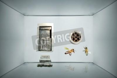 Obraz Tło fantasy z drzwi i dwa okrągłe okna Pszczoły wewnątrz szary karton