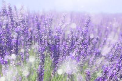 Obraz Tło niewyraźne lato kwiatów lawendy