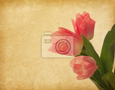 . Tło z tulipanów