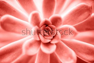 Obraz Tłustoszowata roślina w Żywym koralowym kolorze stosowanym w górę tła. Kolor Pantone z roku 2019 koncepcji.