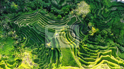 Obraz Top view or aerial rice terraces