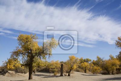 Obraz Topola w sezonie jesiennym