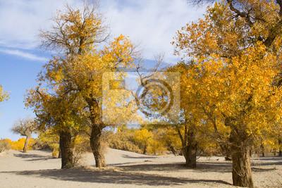 Topola w sezonie jesiennym