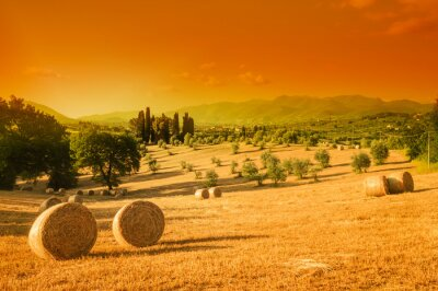 Obraz Toskania, krajobraz, lato