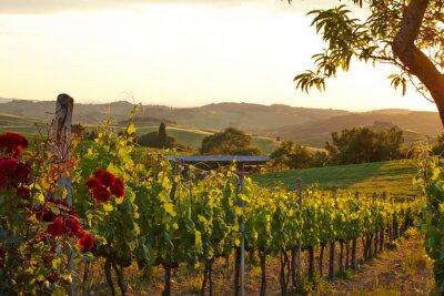Obraz Toskania winnic w spadku