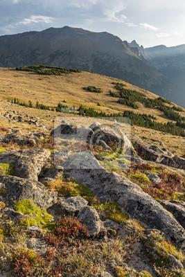 Trail Ridge Tundra