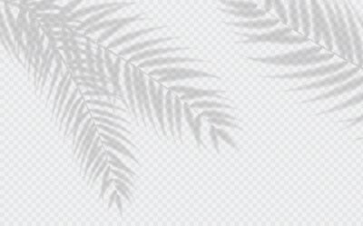 Obraz Transparent shadow effects. Vector with shadow overlays on transparent background. Vector of transparent shadows of palm leaf, Leaves