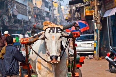 Obraz Transport koszyk Ox na wczesnym rankiem w Delhi, Indie