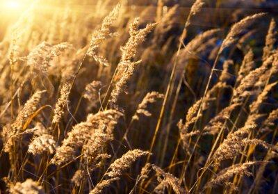 trawa i zachód słońca jesień
