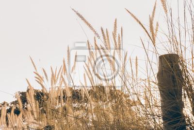 Trawy / Trawa w świetle poranka, styl lekki rocznika.