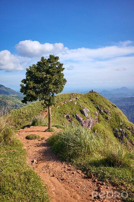 Obraz Tree at the Little Adams Peak on a sunny day, Sri Lanka