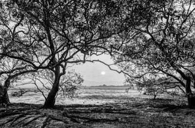 Tree in the sea with color of sunset, Black and white and monochrome style