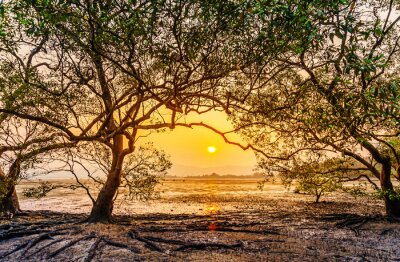 Tree in the sea with color of sunset, Old tree