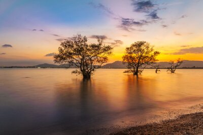 Tree in the sea with color of sunset, Tree in twilight