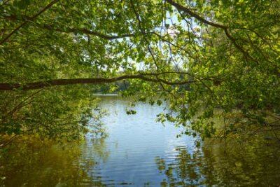 Obraz Tree on the shore of a sunlit lake.