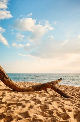 Tree trunk on an empty tropical beach at sunset.