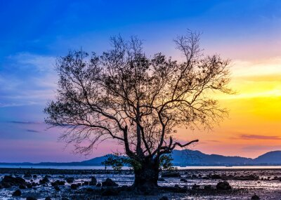 Tree with sea sunset or sunrise and colorful of sky and cloud in twilight
