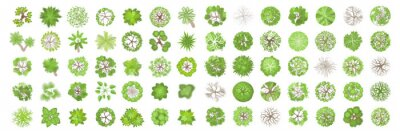 Obraz Trees top view. Different plants and trees vector set for architectural or landscape design. (View from above) Nature green spaces.