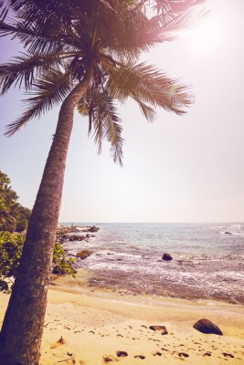 Tropical beach with coconut palm tree against the sun, color stylized picture.