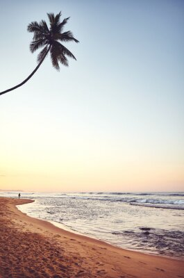 Tropical beach with coconut palm tree at sunrise, color toning applied, Sri Lanka.