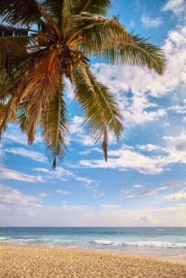 Tropical beach with coconut palm tree at sunset.