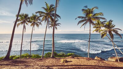 Tropical beach with coconut palm trees at sunrise, color toning applied.